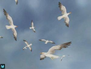Bird-Flock-Seagull-300x226