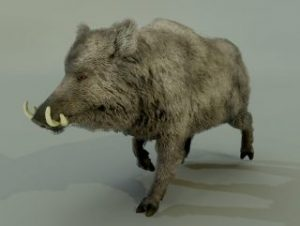 Read more about the article BOAR
