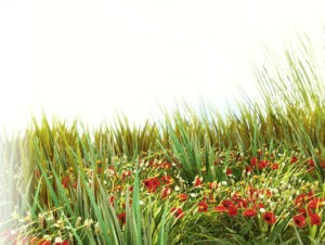 HQ Photographic Textures Grass Pack Vol.1
