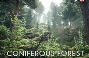 Coniferous-forest-350x230
