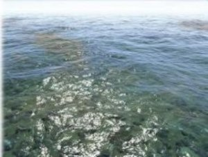Ceto: Ocean System