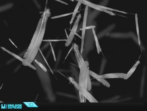 Feather Particle System