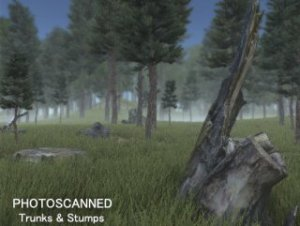 Forest Photoscan Optimised