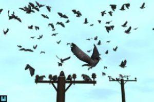 Bird Flock: Crow