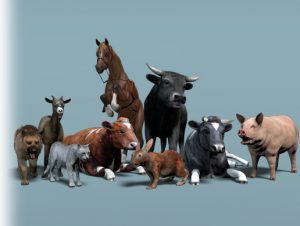 Domestic Animal Pack 1