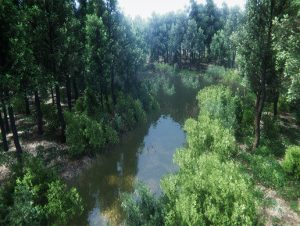 oak-forest-environment