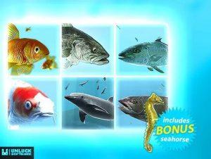 fish-school-bundle