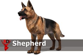 Read more about the article Dog – Shepherd