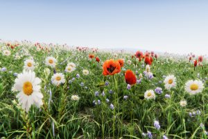 Read more about the article Realistic Grass Flowers Pack