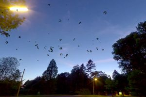 Read more about the article Swarm Of Bats